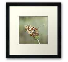 Spotted Fritillary Framed Print