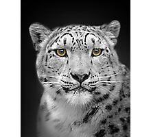 Endangered Snow Leopard Photographic Print