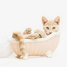 Animal Rescue Portraits- Buff Kitten in the Bath by AndreaBorden