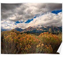 Wild Flowers and Teton Mountains III Poster