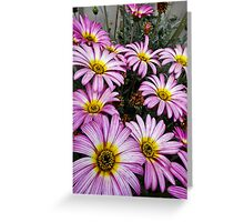 Pretty in Purple Greeting Card