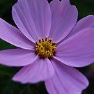 Purple by Jason Dymock Photography
