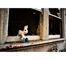 Escapee bunny Photographic Print