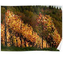 Autumn At The Vineyard Poster