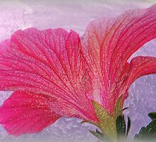 The Back of a Hibiscus, Textured by WeeZie
