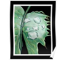 weed leaf with water drops Poster
