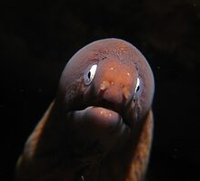 white eyed moray eel by johngill