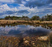 Merritt Island NWR HD by Tom Dunkerton