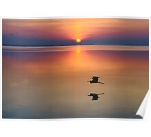 Great Blue heron Sunrise Poster
