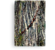 bark - Comboyne plateau NSW, Australia Canvas Print