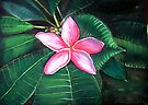 Frangipani Flower by © Linda Callaghan