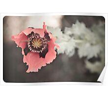 Opium Flower Poster