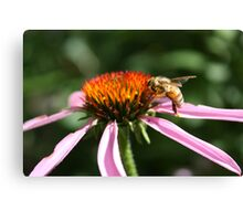 bee in the garden. Canvas Print