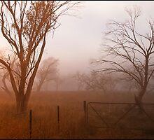 Foggy Morning Jindabyne, NSW by Elizabeth4