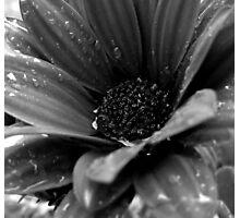 Rain Won't Stop Falling Photographic Print