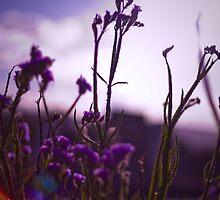 Fleeting memory  by Jocelyn  Parry-Jones