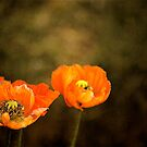 Garden Poppies.. by Mike  Waldron