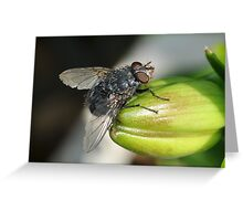 What Big Eyes You Have Greeting Card