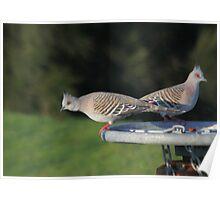 Pigeon Pair Poster