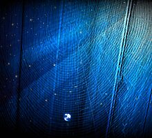 Blue Web (s250915bw) by TruDesigns