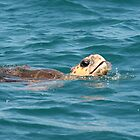 Loggerhead Turtle, Moreton Bay by sueyo