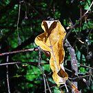 One Dead Leaf by WildestArt