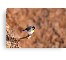 Striated Pardalote by Linda Sass Canvas Print
