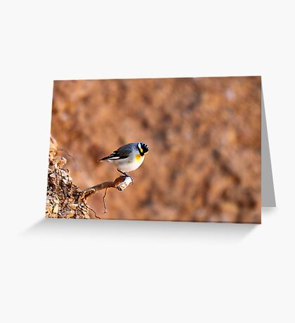 Striated Pardalote by Linda Sass Greeting Card
