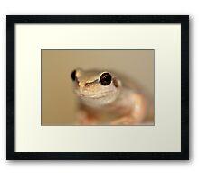 Desert Tree Frog by Steve Sass Framed Print