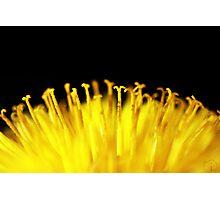 Pollen sunrise Photographic Print