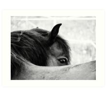3.6.2011: Look of the Pony Art Print