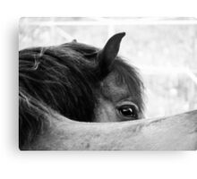 3.6.2011: Look of the Pony Metal Print