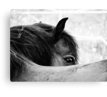 3.6.2011: Look of the Pony Canvas Print