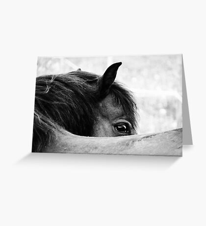 3.6.2011: Look of the Pony Greeting Card