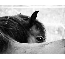 3.6.2011: Look of the Pony Photographic Print