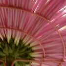 Under The Skirt of a Pink Chrysanthemum by DEB CAMERON