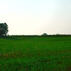 Green meadow by Eduard Isakov