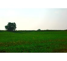 Green meadow Photographic Print