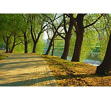 Parkway among trees Photographic Print