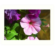 Garden flowers close-up Art Print