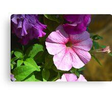 Garden flowers close-up Canvas Print