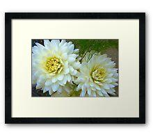 Garden white flowers close-up Framed Print