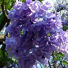 Jacaranda by Antionette