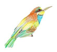 Bee Eater Drawing by ©Maria Medeiros