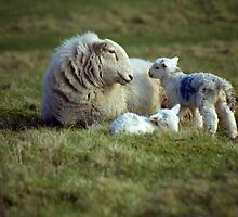 Mother's Pride by Michael Haslam