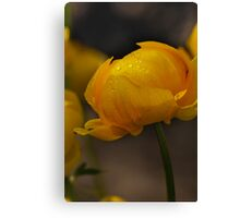 Yellow in spring time (macro) Canvas Print