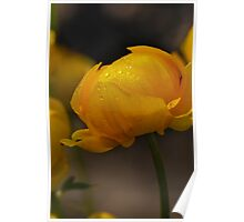 Yellow in spring time (macro) Poster