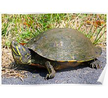 A Turtle Named Andrew By Jonathan Green Poster