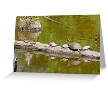 Turtles Sun Log By Jonathan Green Greeting Card