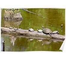 Turtles Sun Log By Jonathan Green Poster
